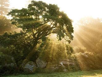 الهدي النبوي في الحفاظ على الصحة…(20)
