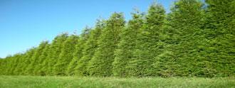 الشجر الاَخضر